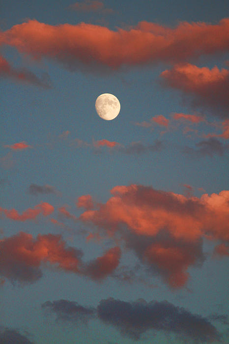 Luna Photograph - Moon Sunset Vertical Image by James BO  Insogna