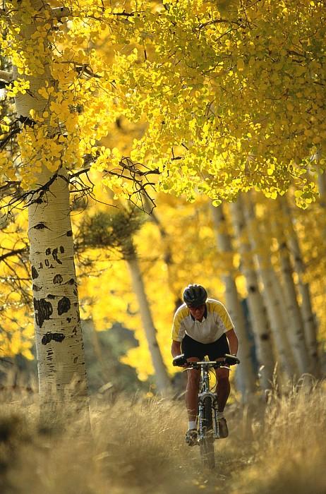 North America Photograph - Mountain Biking Through A Grove by Bill Hatcher