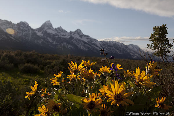 Flowers Photograph - Mountain Flowers by Charles Warren