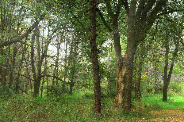 Hovind Photograph - Mystic Forest by Scott Hovind