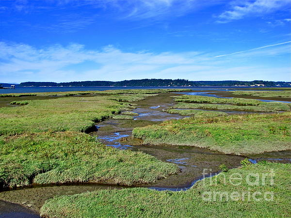 Nature Photograph - Nisqually Estuary At Low Tide by Sean Griffin