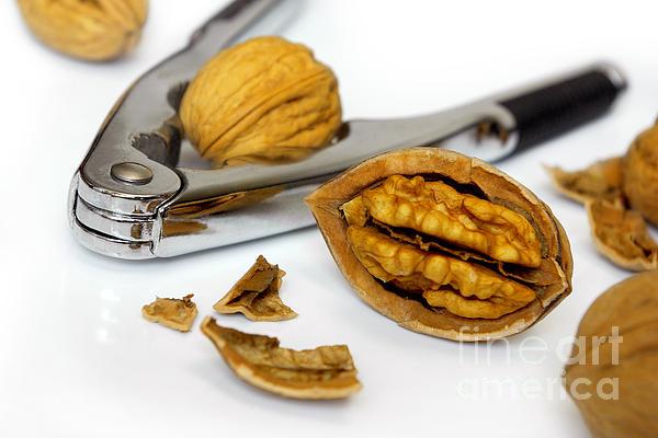 Autumn Photograph - Nut Cracker by Carlos Caetano