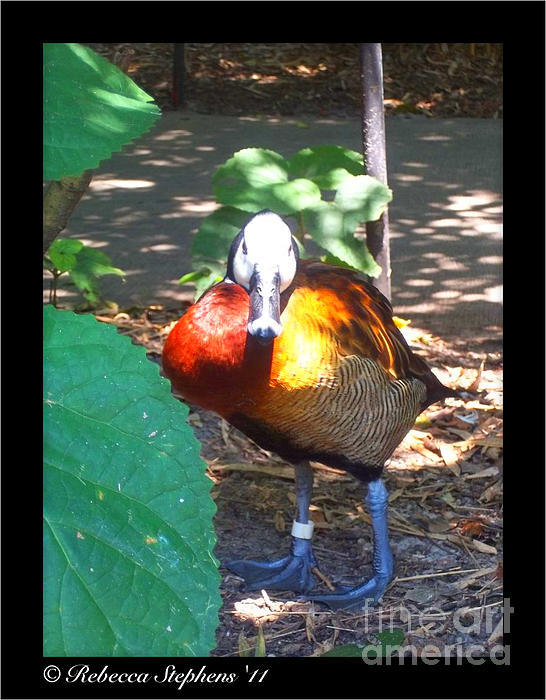 Bird Photograph - Official Ambassador by Rebecca Stephens