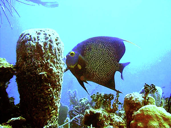 Scuba Photograph - On The Reef by Barry Jones