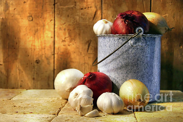 Bulb Photograph - Onion Harvest by Sandra Cunningham