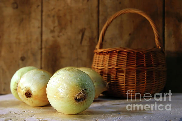 Bulb Photograph - Onions On The Counter by Sandra Cunningham