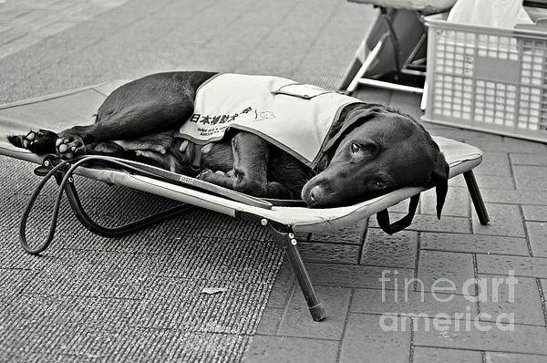 Seeing Eye Dog Photograph - Only Human by Dean Harte
