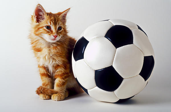 Cat Photograph - Orange And White Kitten With Soccor Ball by Garry Gay