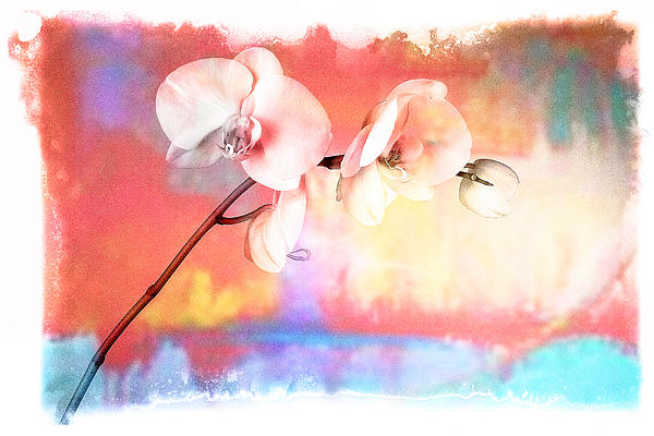 Art Pyrography - Orchid 3 by Mauro Celotti