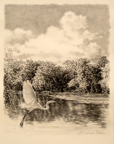 Marsh Scenes Drawing - Original Congaree River Flight by Michael Story