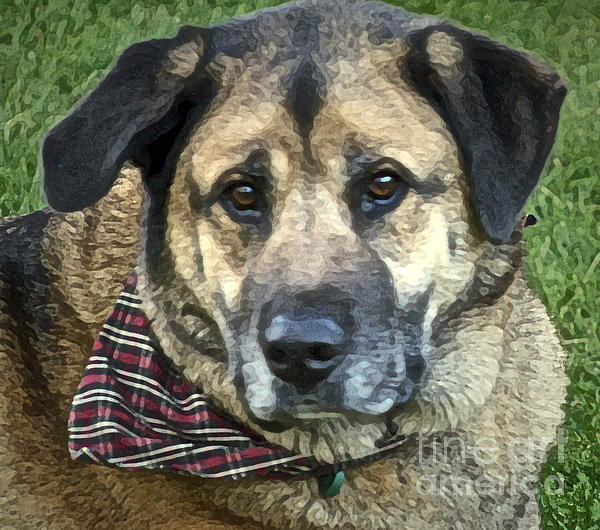 Shepherd Mix Photograph - Our Goofy by Gwyn Newcombe