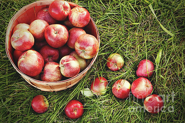 Overhead Photograph - Overhead Shot Of A Basket Of Freshly Picked Apples by Sandra Cunningham