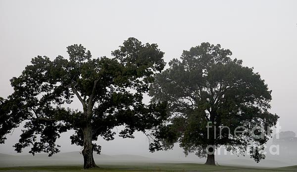 Tree Photograph - Pair by Amanda Barcon