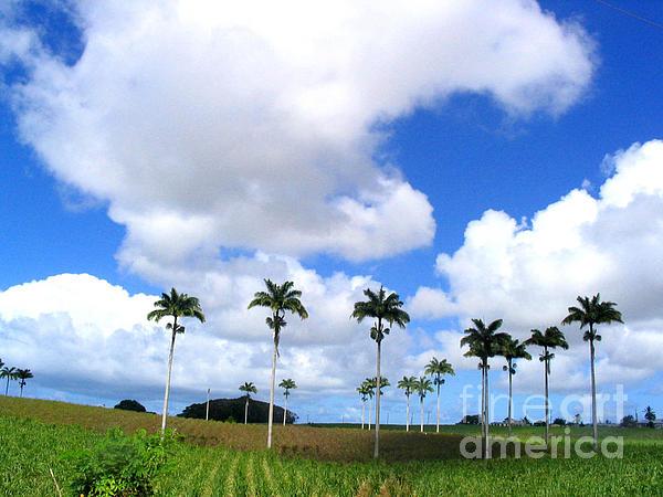 Barbados Photograph - Palm Parade by Barbara Marcus