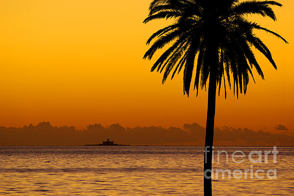 Beach Photograph - Palm Tree Sunset by Carlos Caetano