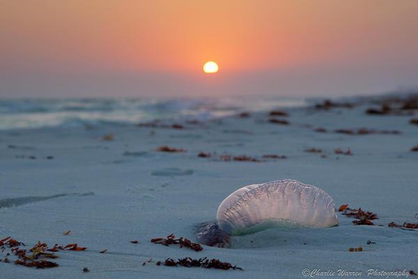 Beach Photograph - Peaceful Man Of War by Charles Warren