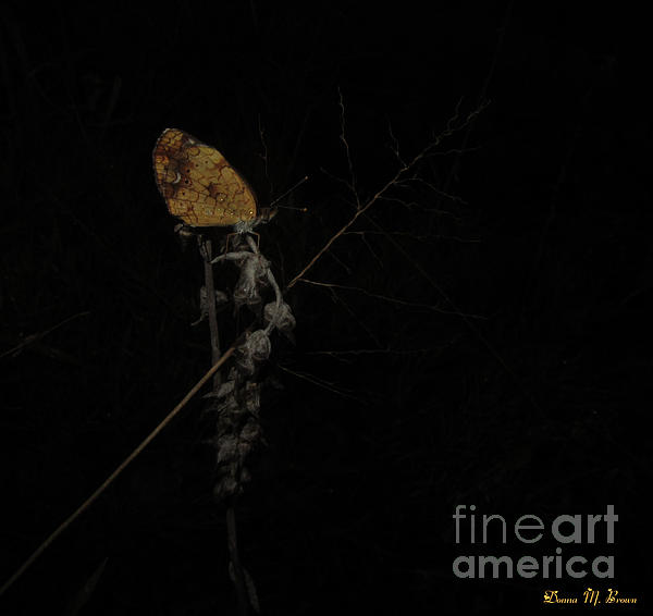 Insect Photograph - Pearly Crescentspot Butterfly by Donna Brown