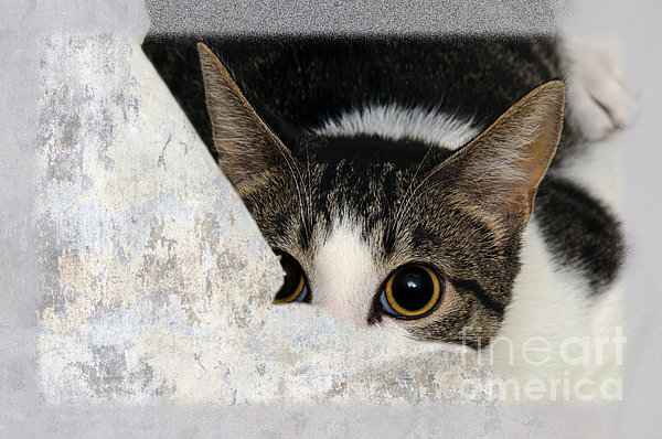 Fine Art Cat Photograph - Peek A Boo I See You Too by Andee Design