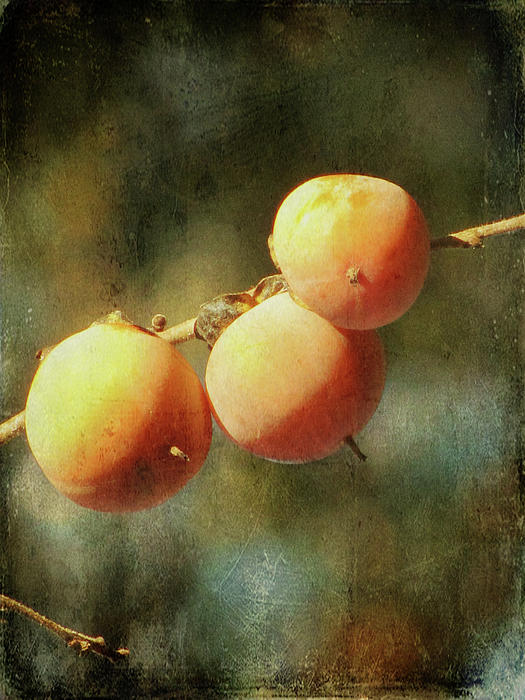 Persimmon Photograph - Persimmons by Amy Tyler