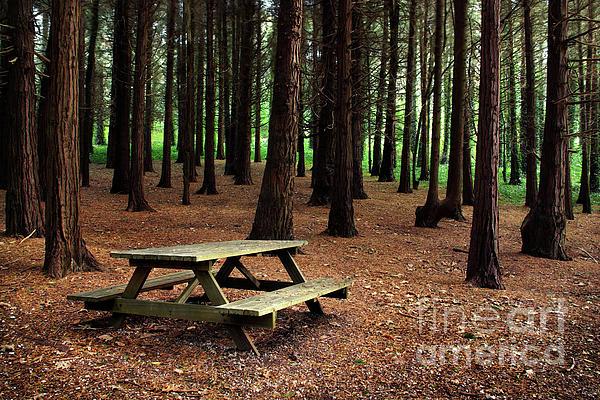 Autumn Photograph - Picnic Table by Carlos Caetano