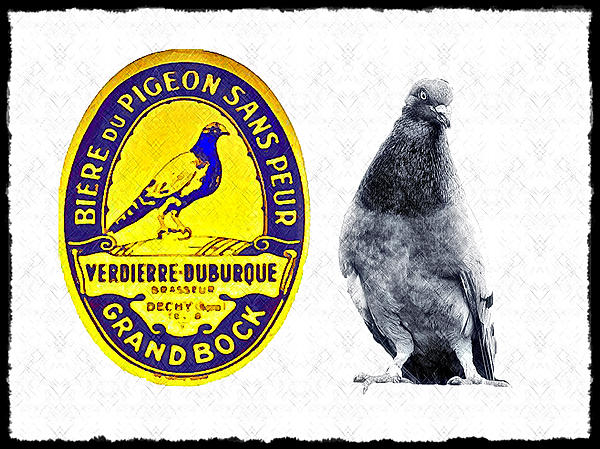 Pigeon Photograph - Pigeon Grand Bock by Bill Cannon