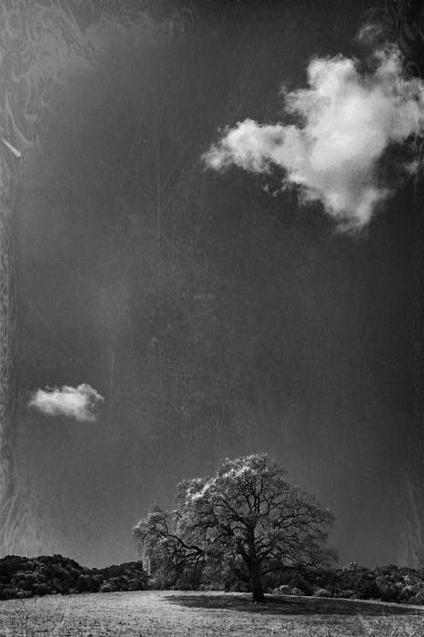 Oak Tree Photograph - Places We Remember by Laurie Search