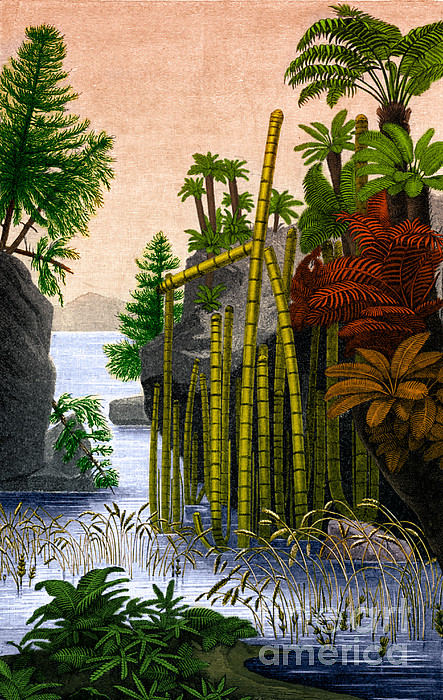 Science Photograph - Plants Of The Triassic Period by Science Source