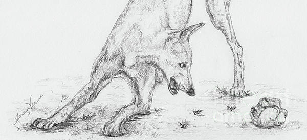 Dogs Drawing - Play II by Teresa Vecere