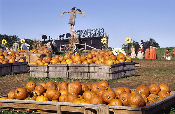 Wood Crates Photograph - Plenty Of Pumpkins by Sally Weigand