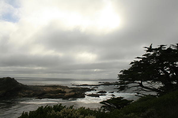 Point Lobos Reserve Photograph - Point Lobos View by Suzanne Lorenz