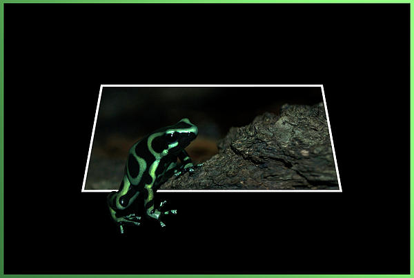 Out Of Bounds Photograph - Poisonous Green Frog 02 by Thomas Woolworth