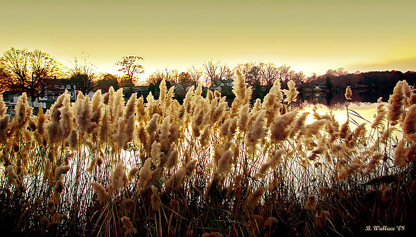 2d Photograph - Pond Grasses by Brian Wallace