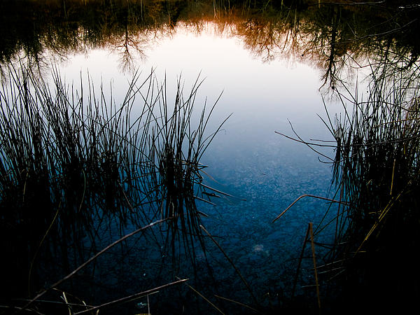 Blue Photograph - Pond Reflections by Susan Adams