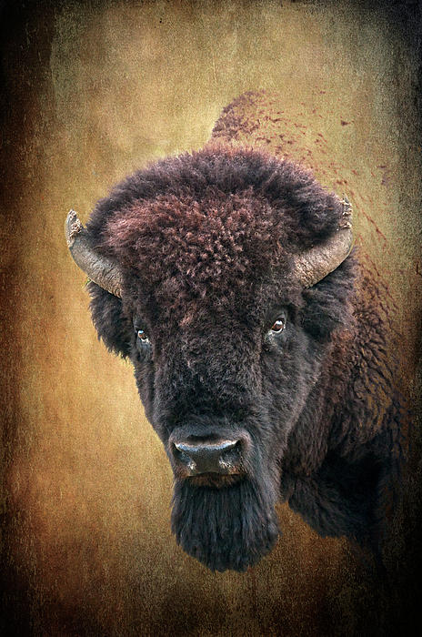 Bison Photograph - Portrait Of A Buffalo by Tamyra Ayles