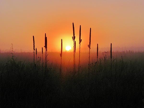 Prairie Photograph - Prairie Sentinels by John Wanserski