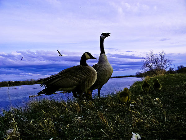 Spring Photograph - Proud Parents by Joshua Dwyer