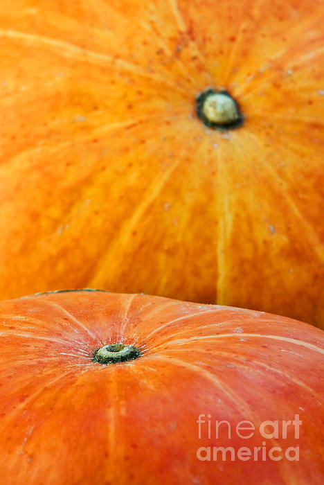 Agriculture Photograph - Pumpkins Background by Carlos Caetano