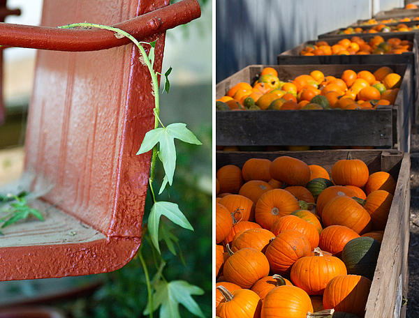 Red Photograph - Pumpkins by Rebecca Cozart