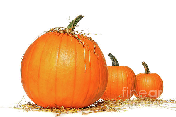 Agriculture Photograph - Pumpkins With Straw On White  by Sandra Cunningham