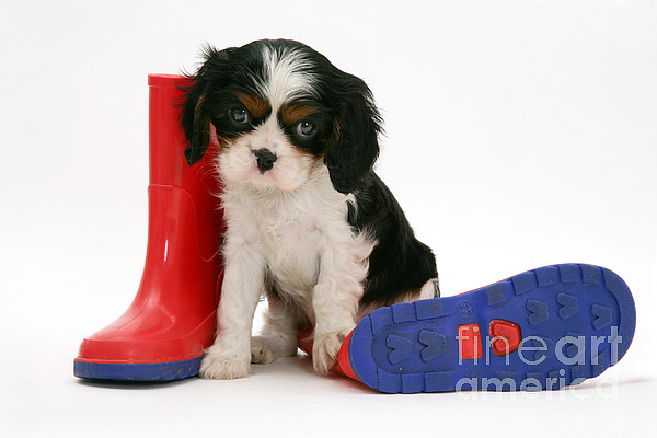 Animal Photograph - Puppies With A Childs Rain Boots by Jane Burton