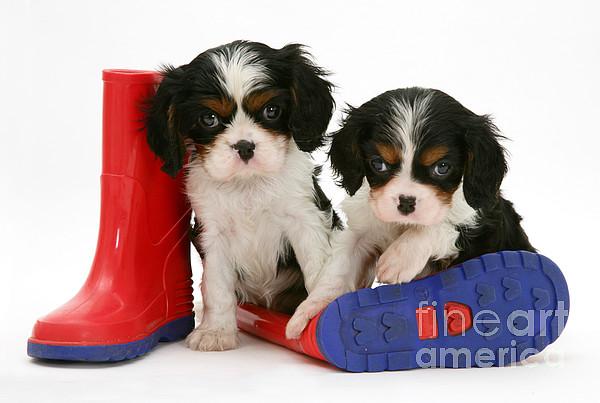 Animal Photograph - Puppies With Rain Boats by Jane Burton