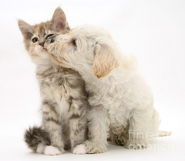 Animal Photograph - Puppy Nuzzles Kitten by Jane Burton
