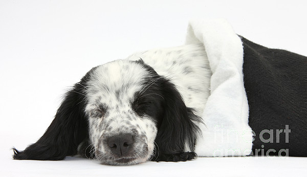 Nature Photograph - Puppy Sleeping In Christmas Hat by Mark Taylor