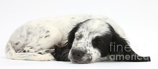 Nature Photograph - Puppy Sleeping by Mark Taylor