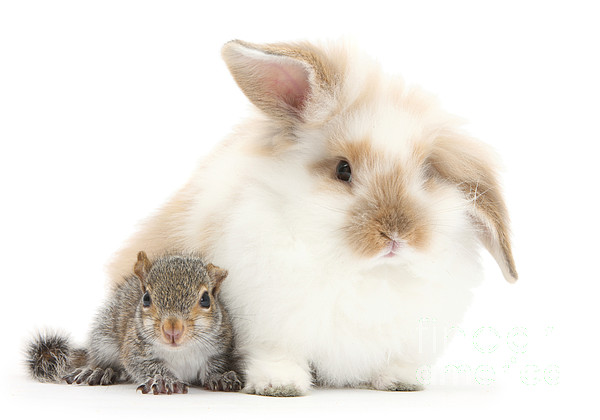 Nature Photograph - Rabbit And Squirrel by Mark Taylor