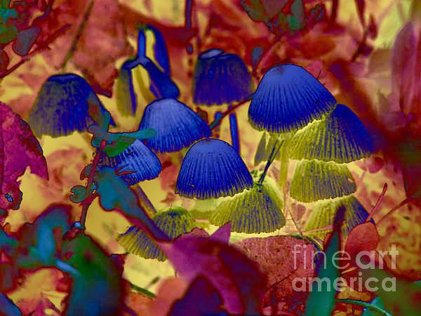 Mushrooms Digital Art - Rainbow Mushrooms by Erica Hanel