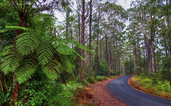 Hdr Photograph - Rainforest - Port Macquarie - Australia by Bryan Freeman