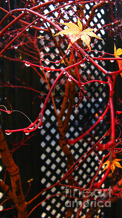 Poem Photograph - Raining Autumn Leaves by Xueling Zou