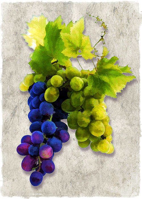 Wine Painting - Red And White Grapes by Elaine Plesser