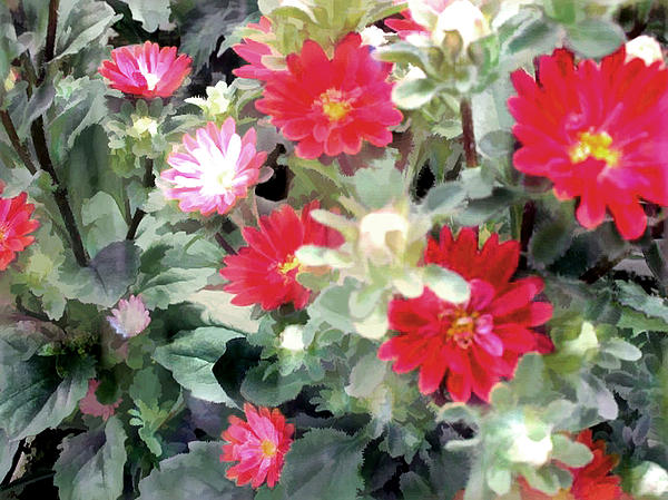 Red Asters Painting by Elaine Plesser